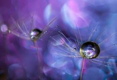Dancing+Queen+by+Miki+Asai+on+500px