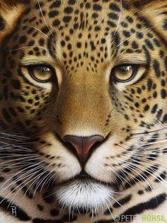 """""""Portrait of a Leopard"""" - Bild von Peter Höhsl bei KunstNet"""