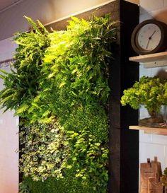 Картинки по запросу живые стены из растений