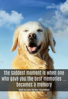 quote the saddest moment is when one who gave you the best memories ... becomes a memory. Remembering Rainbow Dog SUGAR the Golden Retriever