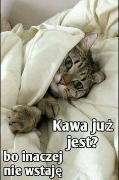 Good Night, Good Morning, Weekend Humor, Diy Trellis, Sweet Dreams, Funny, Animals, Facebook, Nu Skin