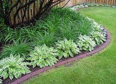 Lilies and hostas.