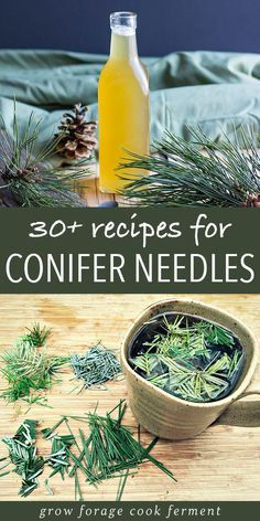 Conifer needles are an edible and delicious foraged treat! Get this recipe guide for all of the wonderful things you can make with evergreens like pine needle tea syrup cookies balms and more! Healing Herbs, Medicinal Plants, Natural Healing, Healing Light, Natural Medicine, Herbal Medicine, Kombucha, Herbal Remedies, Natural Remedies