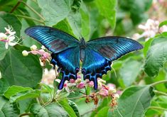 Butterfly Kisses, Butterfly Art, Butterfly Design, Dragonfly Insect, Moth Caterpillar, A Bug's Life, Beautiful Butterflies, Dragonflies, Spirit Animal