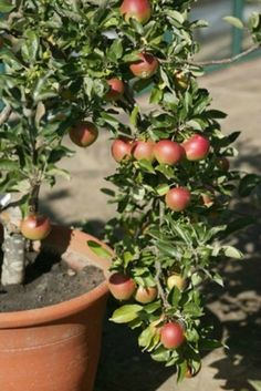 How to Grow Fruits in Containers