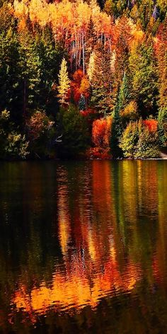 Reflection to the lake of autumn