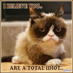 Another Grumpy Cat meme by the other Grumpy Kat 2017 You are a total idiot..
