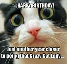 Happy Birthday Cats Funny Quotes Friends Cat Wishes