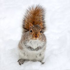 Squirrel photo baby squirrel winter photography by bomobob on Etsy, $15.00
