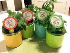 First Class Teacher: Thank You Parent Volunteers gifts. Strawberry or mint plants with cute tag.