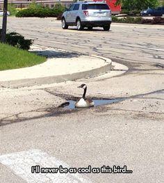Optimistic Goose