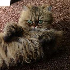 Good morning!!  #Padgram Cats Of Instagram, Instagram Posts, Good Morning, Animals, Buen Dia, Animais, Animales, Bonjour, Animaux