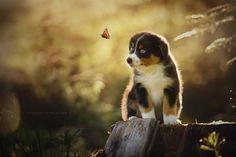 ...wenn Träume fliegen lernen... by Anne Geier on 500px