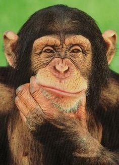 """What exactly does this phrase """"I'll be a monkey's uncle"""" mean? Very suspicious indeed..."""