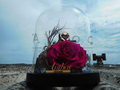 FOREVER ROSES Forever Rose, Thessaloniki, Roses, Pink, Rose