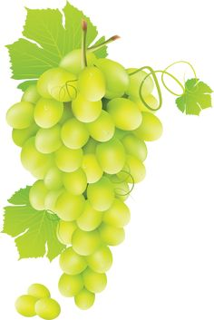 This high quality free PNG image without any background is about grape, berry, grapes, fruit, green grapes and food. Sunflower Template, Nursery Book, Garden Labels, Wine Painting, Conifer Trees, Vides, Green Grapes, Growing Grapes, Garden Trellis