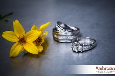 Wedding rings! www.ambrosia-photography.com