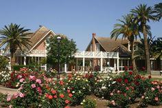 Rose Garden @ Historic Sahauro Ranch