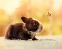 Another cute pic... Think I want a rabbit now @valeriepadilla soo cute!!