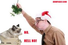 grumpy cat, christmas mistle toe,