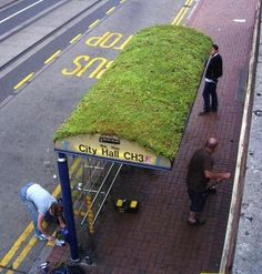 This bus stop with a green grass roof is in Sheffield, South Yorkshire, England. Bus Stop Design, Green Roof System, Bus Shelters, Living Roofs, Living Walls, South Yorkshire, Yorkshire England, Green Architecture, Residential Architecture