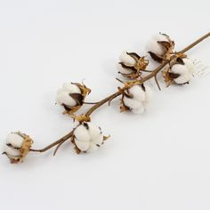 handmade cotton stems @Sinofloral