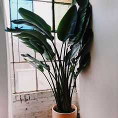 Leaf and June | Interior Plant Design