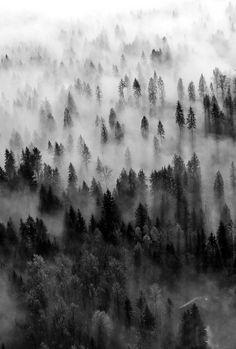 Forest Mist #blackandwhite #photography