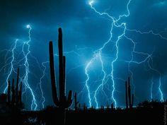 Aqua Lightning & Cactus Silhouette