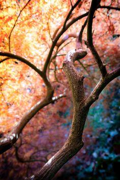Tree Light by *WTek79 on deviantART