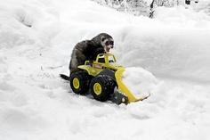 """%$#@&! Curse you evil snow!!"""