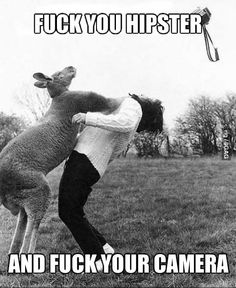 Funny pictures about I said no photos! Oh, and cool pics about I said no photos! Also, I said no photos! Troll, Funny Animals, Cute Animals, Wild Animals, Crazy Animals, Strange Animals, Animal Fun, Happy Animals, Animal Pics
