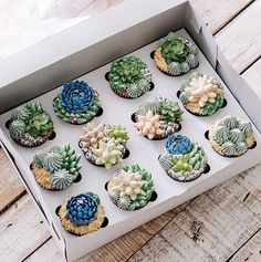 Succulent Cupcakes By Ivenoven Cupcakes Succulents, Kaktus Cupcakes, Tea Cakes, Cupcake Cakes, Beautiful Cakes, Amazing Cakes, Cactus Cake, Almond Cakes, Yummy Cakes