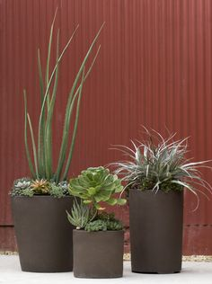 Succulent Compositions at Flora Grubb Gardens in our High Fire pots.
