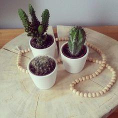 Boomschijf, woonketting, cactus