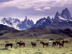 Argentina! Patagonia AND Buenos Aires, please! :)
