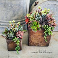 Nice succulents duo by Megan Boone.