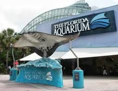 THE FLORIDA AQUARIUM. The #Florida #Aquarium is 250,000-square-foot aquarium that houses more than 20,000 plants and animals in salt and fresh water tanks. There are other things such as shark-feeding, behind the scenes tours, dolphin tours and outdoor aquatic play area for the young ones, that features a climbable pirate ship. While you're there you can enjoy a bite to eat or even get something to take home from your trip in the gift shop too!