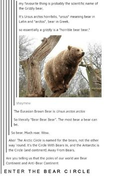 Much wow. so much to bear