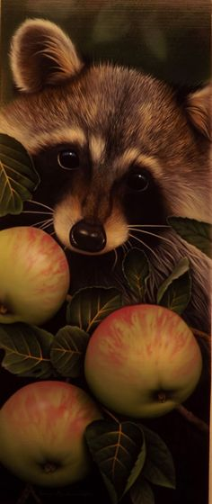 RACCOON WITH APPLES BY JERRY GADAMUS