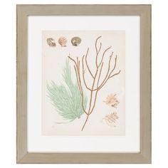 Coastal Relic Framed Print I