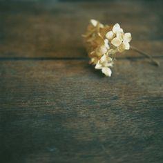 beautiful autumnal imagery by Kajico
