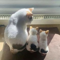 Funny Cute Cats, Silly Cats, Cute Cat Gif, Funny Cat Pictures, Funny Animal Videos, Baby Kittens, Cats And Kittens, Best Cat Gifs, Cat Online