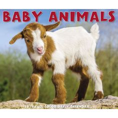 Baby Animals 2019 Box Calendar (Other) Gluten Free Food List, Vegan Food List, What Foods Are Vegan, Kids Library, What About Tomorrow, Brown Trout, Desk Calendars, Free Baby Stuff, Book Gifts