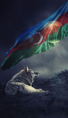 Grey wolf and Azerbaijan flag wallpaper. Most Beautiful Wallpaper, More Wallpaper, Retro Wallpaper, Azerbaijan Flag, Alone Art, Wallpapers For Mobile Phones, Apple Wallpaper Iphone, Flag Art, Great Backgrounds
