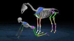 Human and equine bone correlation (Level 2)