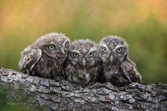 Three grimly Goblins by MichaelMilfeit. @go4fotos