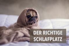 Was gibt es grundsätzlich beim Schlafplatz zu beachten? Ich verrate dir wichtige Punkte, die du bei der Auswahl des Hundebetts unbedingt beachten solltest.