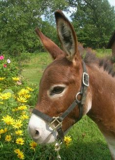 Country Living ~ Sweet donkey