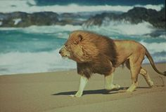 Today you should feel like a lion running on a beach.